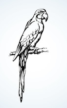 Parrot Bird Icon. Vector Drawing