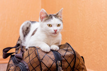 White Cat Sits On A Suitcase. ...