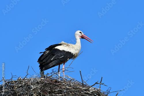 Naklejki Bocian  young-stork-against-blue-sky-zahlinice-czech-republik