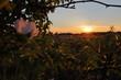 Sonnenuntergang mit Wildrosen