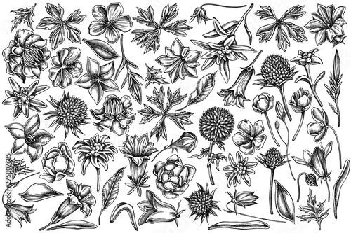 Vector set of hand drawn black and white bellflower, edelweiss, globethistle, gl Wallpaper Mural