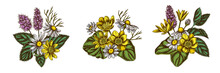 Flower Bouquet Of Colored Celandine, Chamomile, Peppermint