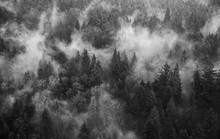 Clouds In Forest