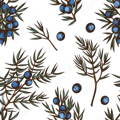 Fototapeta Seamless pattern with hand drawn colored juniper obraz