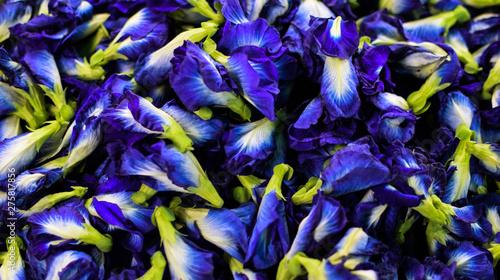 Deurstickers Paradijsvogel Clitoria ternatea, purple or pea flowers, Pattern and Background, medicinal plants