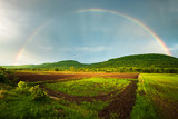 Fototapeta Tęcza - Rainbow Over the Rice Farm