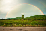 Fototapeta Rainbow - Rainbow Over the Rice Farm