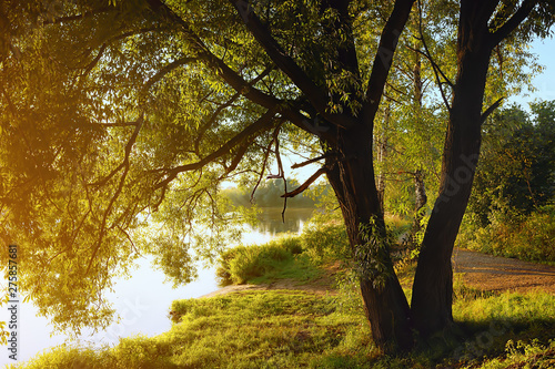 Montage in der Fensternische Schokobraun Willow tree by coast of pond at sunset of sunny summer day