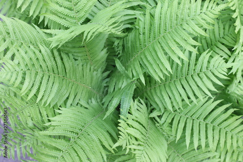 Recess Fitting Tropical leaves leaf of fern