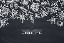 Floral Design With Chalk Bellflower, Edelweiss, Globethistle, Globeflower, Meadow Geranium, Gentiana