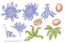 Vector Set Of Hand Drawn Pastel Passion Flower