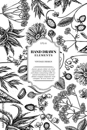 Card design with black and white aloe, calendula, lily of the valley, nettle, st Wallpaper Mural