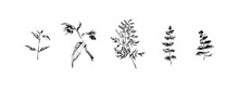 Hand Drawn Set Of Wild Flowers And  Leaves. Outline Plants Painting By Ink Pen. Sketch Or Doodle Style Botanical Vector Illustration. Black Isolated Herbs On White Background