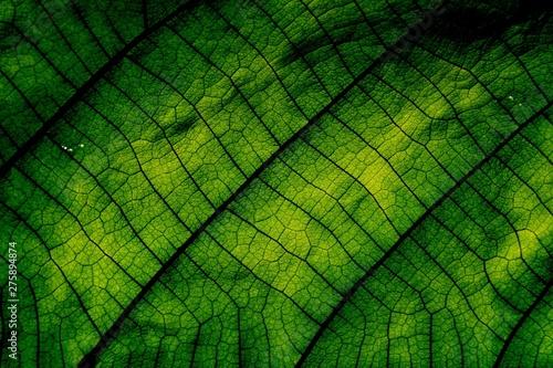 Macro shot, Green leaf texture. Tablou Canvas