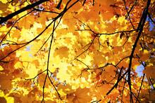 Sunny Daylight Illuminates Cro...