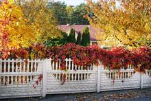 Multicolor Autumn Bright Folia...