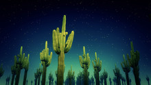 Cactus Nighttime 3d Render