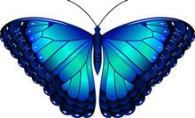 Owl Butterfly Lat Caligo Euril...