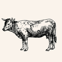 Cow Isolated On White Background Vintage Handmade