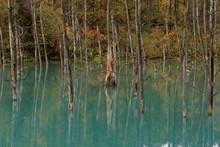 The Blue Pond In Autumn, Biei-cho, Hokkaido, Japan
