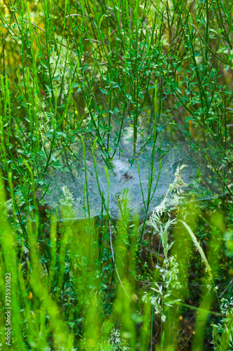 Foto op Canvas Bos in mist Spring, Monfrague National Park, Caceres, Extremadura, Spain, Europe