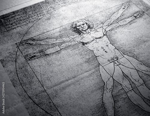 Fotografía  Anatomy Art Drawing