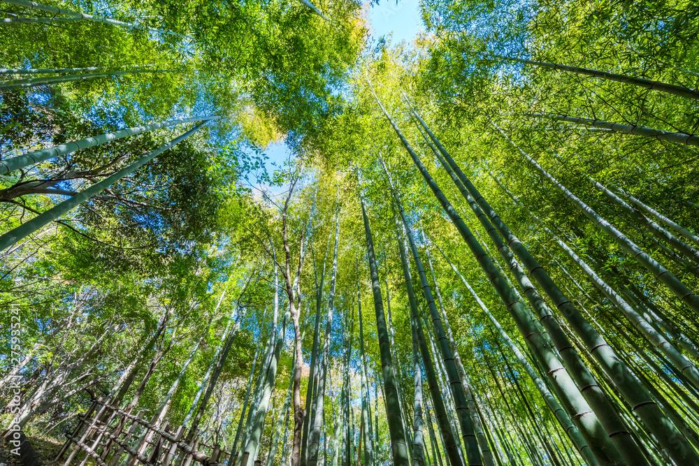 都筑中央公園 ばじょうじ谷戸の竹林