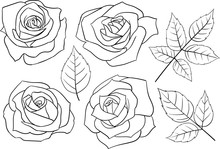 Set Of Hand-drawn Linear Roses...