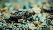 The Baby Snapper