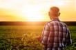 Leinwanddruck Bild - Rear view of senior farmer standing in soybean field examining crop at sunset.