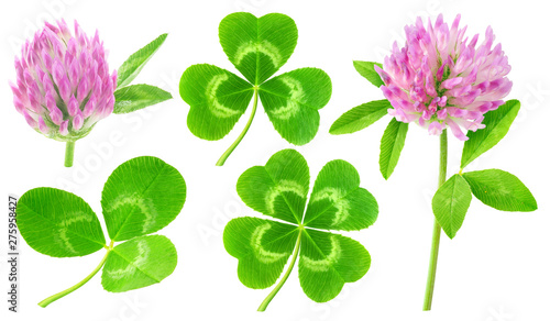 Poster Amsterdam Isolated clovers. Collection of clover leaves and flowers isolated on white background with clipping path