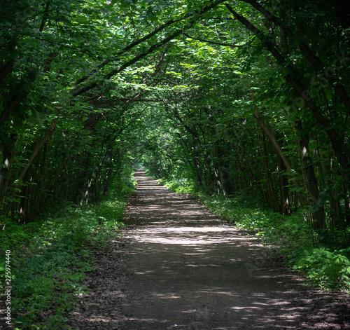 Spoed Fotobehang Weg in bos path among trees in shady Park,outdoors