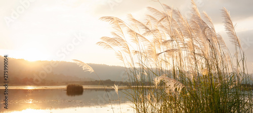 Blanc A tranquil sunset lake with reed flowers.