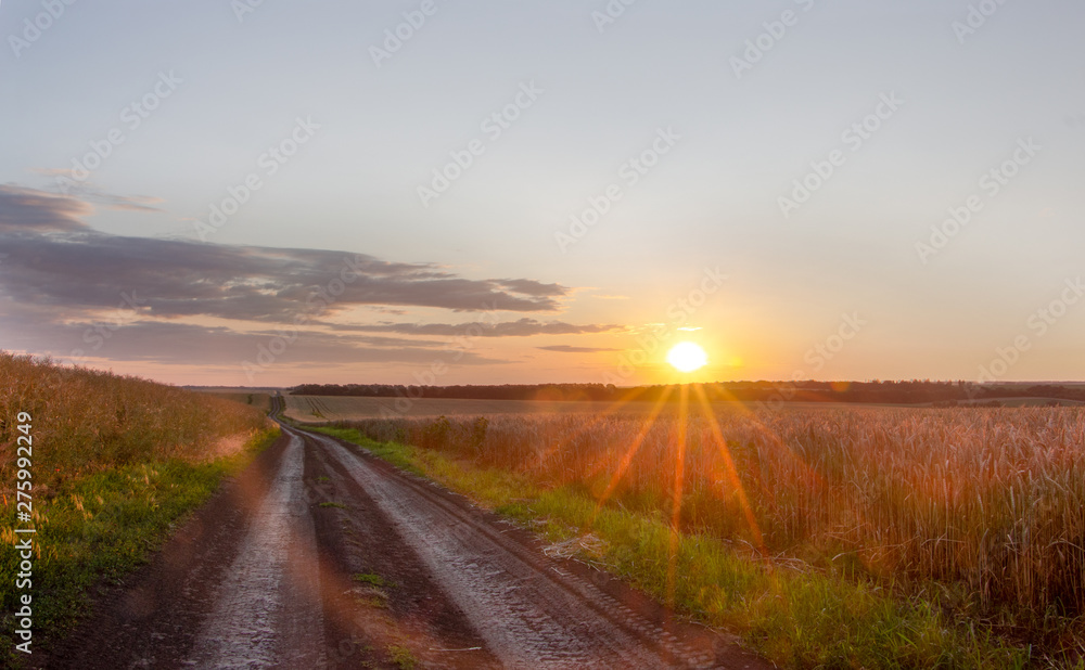 Fototapety, obrazy: Wheat field with blue sky with sun and clouds against the backdrop