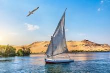 Seagull Over Sailboat