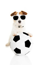 JACK RUSSELL DOG PLAYING WITH A SOCCER BALL. ISOLATED ON WHITE BACKGROUND.