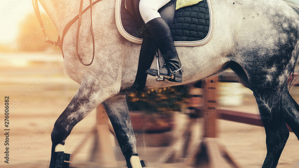 Fototapety, obrazy: The leg of the rider in the stirrup