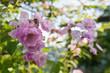 Rose flower photo. Beautiful spring or summer bloomingrose plant. Flower blossom bright image. Rose bush bloom.Selective focus, blurred background