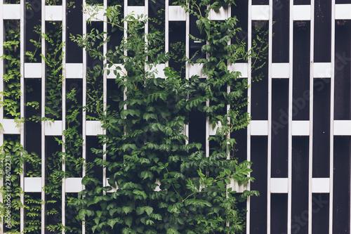Carta da parati Vertical gardening on a metal chrome grid