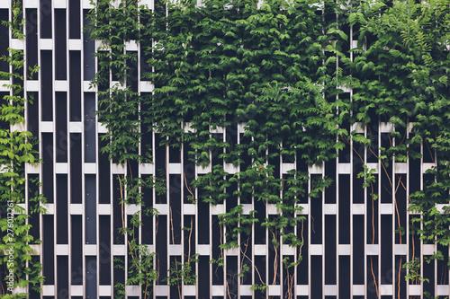 Vertical gardening on a metal chrome grid