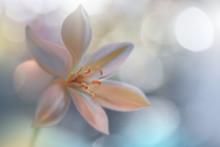 Closeup Macro Photography.Flor...