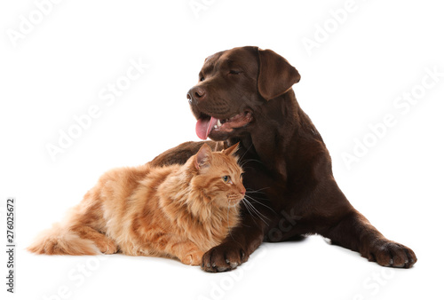 Cat and dog together isolated on white. Fluffy friends Canvas Print