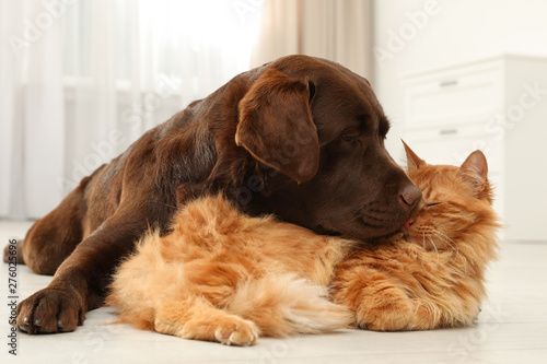 Photo  Cat and dog together on floor indoors. Fluffy friends