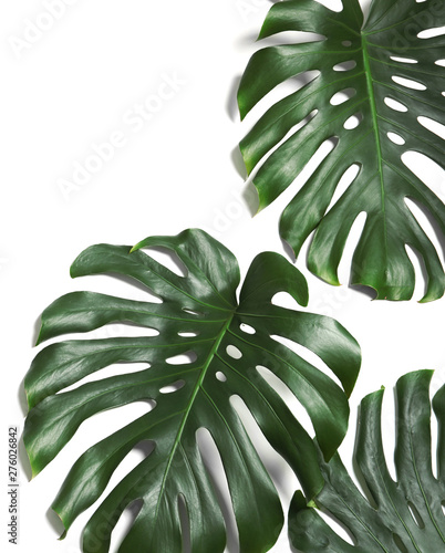 Green fresh monstera leaves on white background, top view Wallpaper Mural