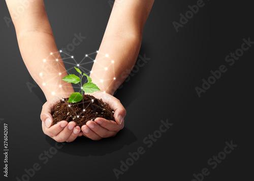 手のひらの中の植物-新芽-若葉-成長-未来-ハート