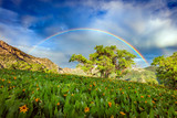 Fototapeta Tęcza - Summer sunset with wildflowers and a rainbow in the Wasatch Mountains, Utah, USA.
