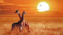 Group Of Giraffe At Sunset In The Serengeti National Park. Tanzania. Wild Nature Of Africa. African Artistic Landscape.