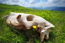 Huge Skull In The Grass