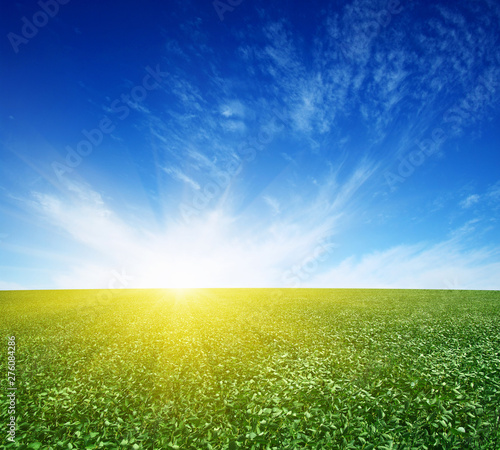 Foto auf Leinwand Bekannte Orte in Asien green field and blue sky