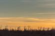 canvas print picture - bunter himmel und baeume